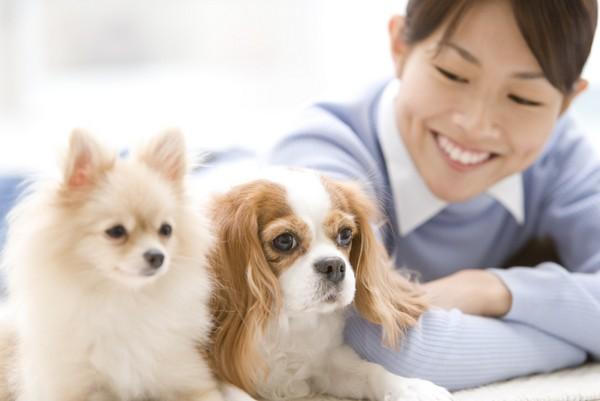 子犬への愛情表現
