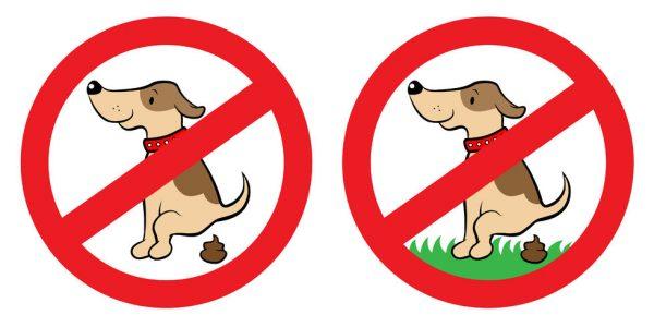 犬がうんちを食べる