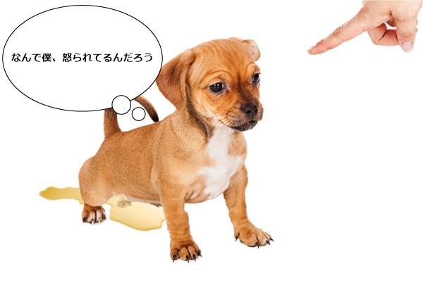 犬がうんこを食べる原因