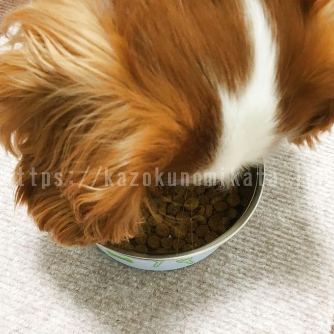 アーテミスアガリクスを食べている犬