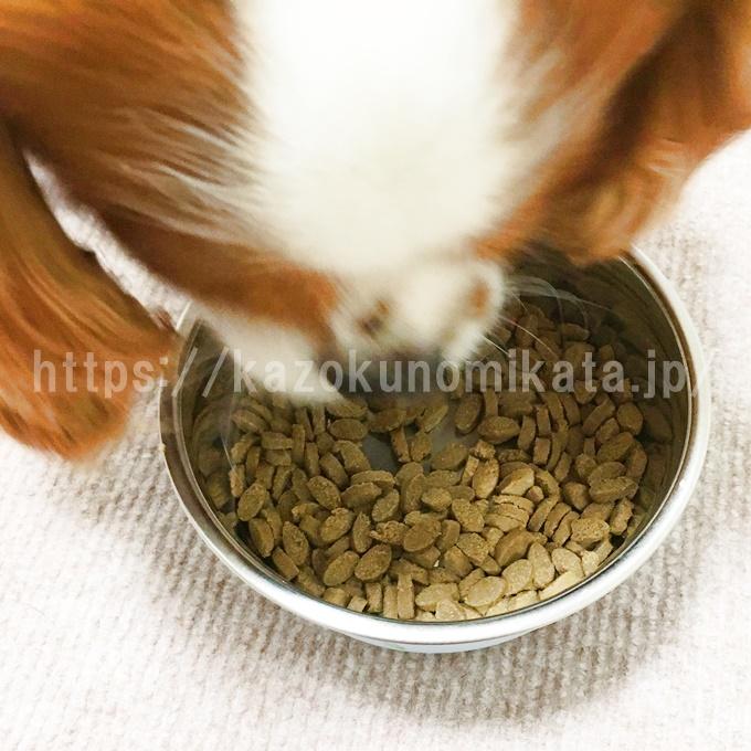 いぬひかりを食べている犬