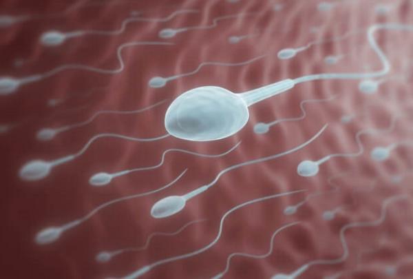 コエンザイムQ10 効果 精子