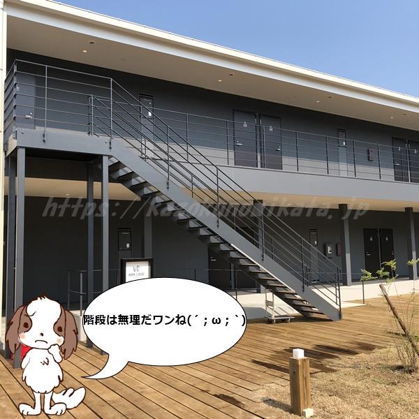 伊王島 犬 部屋