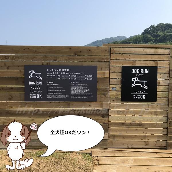 伊王島 犬 ドッグラン