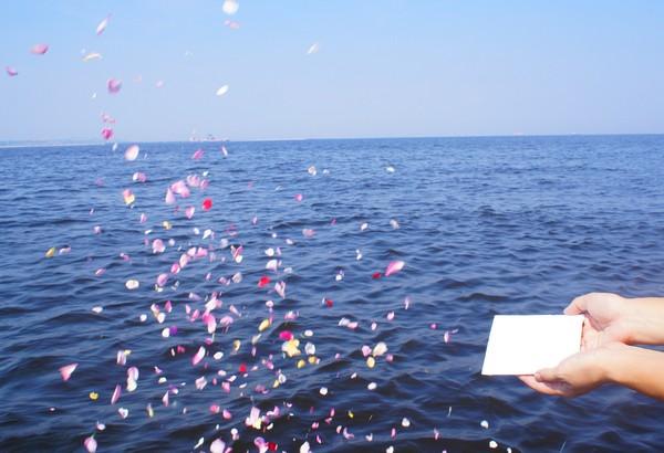 海 散骨 献花